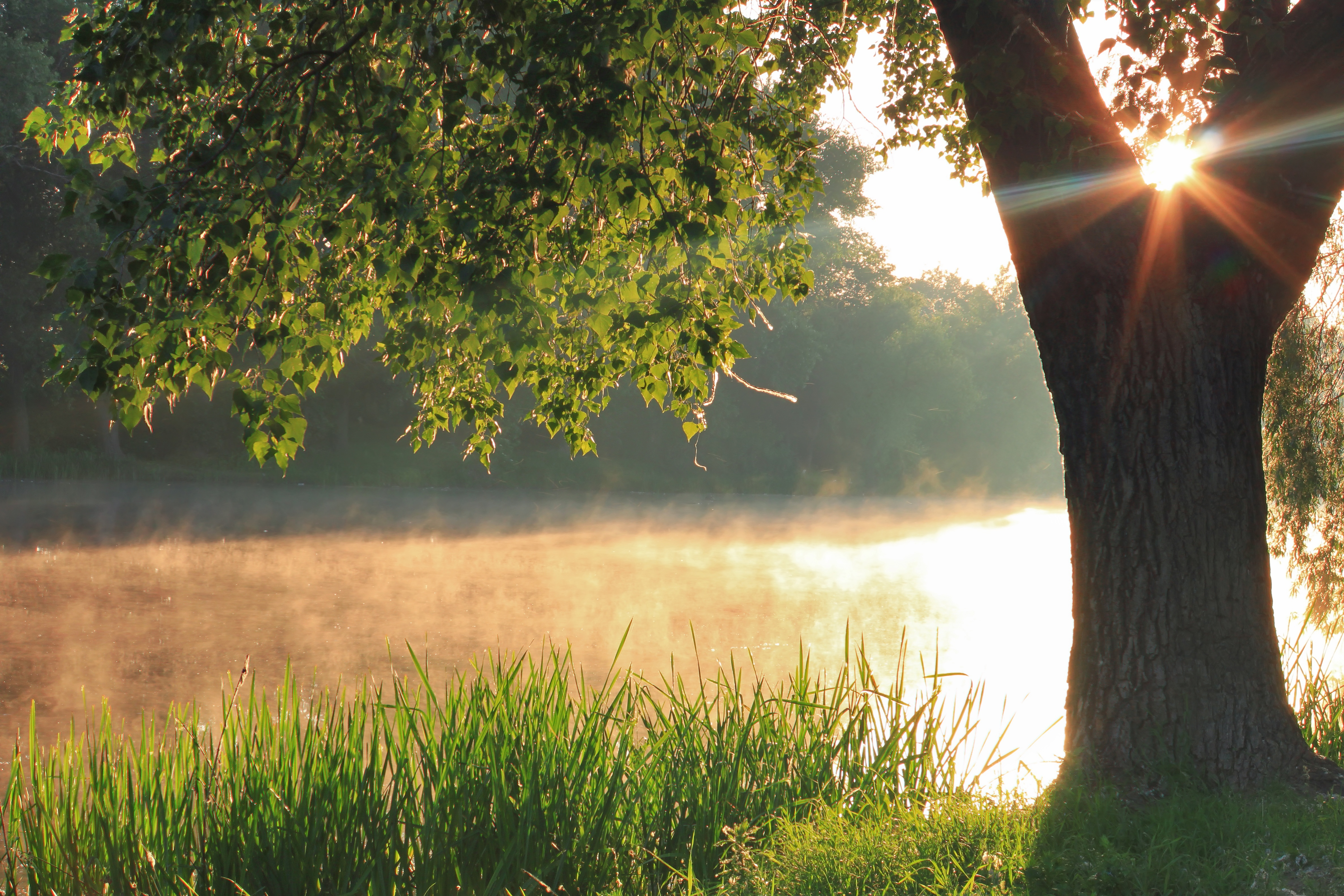 Mist rises from a pond at sunrise